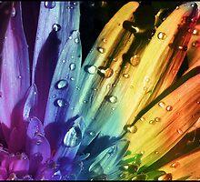 Floral rainbow by Swaroop R
