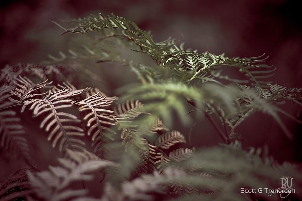 Shadows and Ferns by Scott G Trenorden