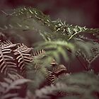 Shadows and Ferns by Scott G Trenorden