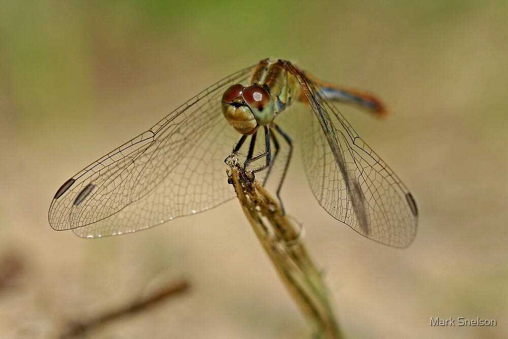 Green Dragonfly 6 by Mark Snelson