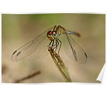 Green Dragonfly 6 Poster