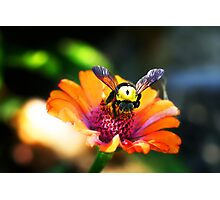 The Bumble Bee Photographic Print