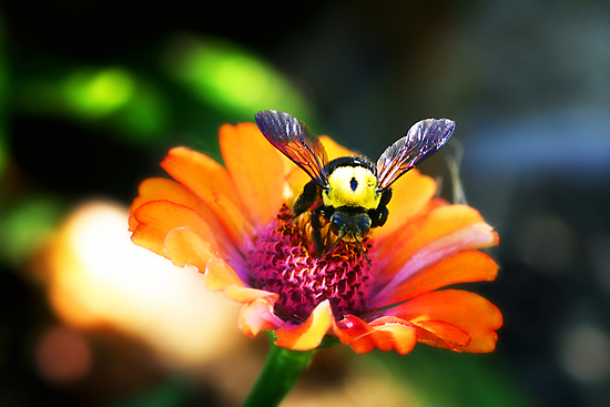 The Bumble Bee by Naomi Mawson