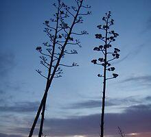 Aloe 1 by velvet