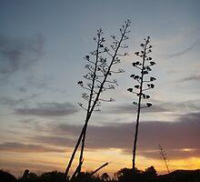 Aloe 2 by velvet