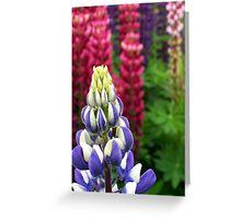 Colourful Foxgloves v2 Greeting Card