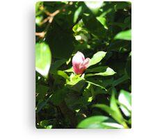 Dandenong Magnolia Canvas Print