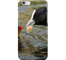 Australian Coot feeding a Chick iPhone Case/Skin