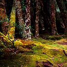 Moss - Pine Valley - Tasmania by James Pierce