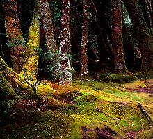 Moss - Pine Valley - Tasmania by James Pierce