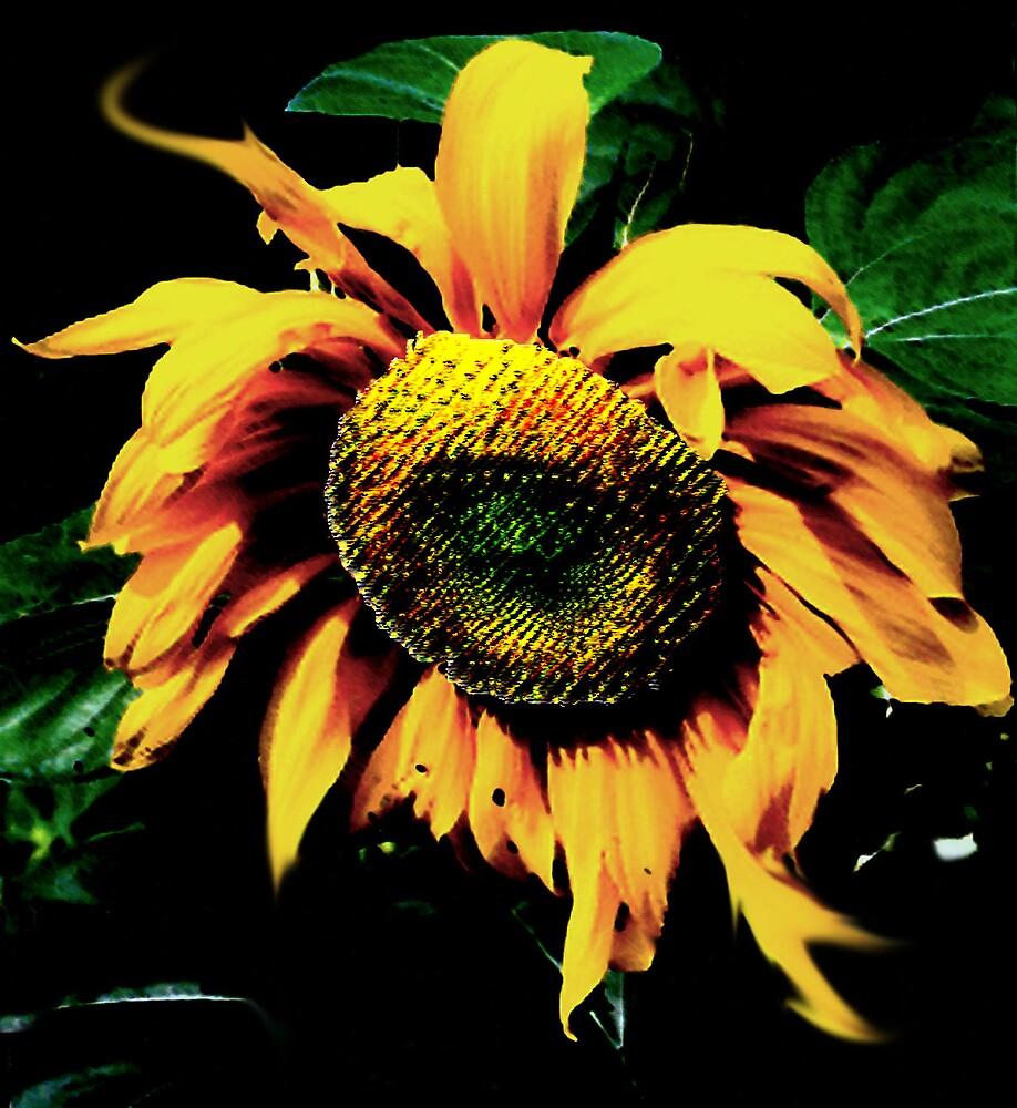 Sunflower by Spartacus