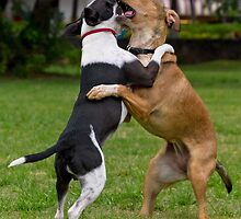 What?! Dog wrestling is fixed? by Alex Preiss
