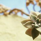 Succulent by Jessica King