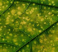 Green veins by David James