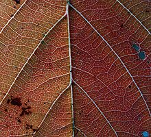 Red veins by David James
