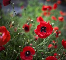 Lest we forget ...... by Lynda Heins
