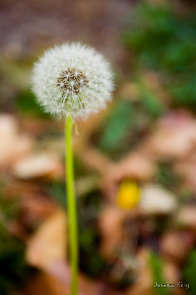Dandelion Clock by Jessica King