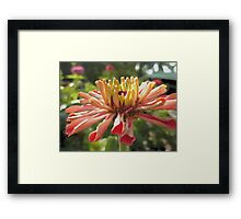 Pink Flower Blooming Framed Print