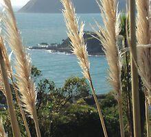 Titahi Bay, New Zealand by Jasna Bogdan