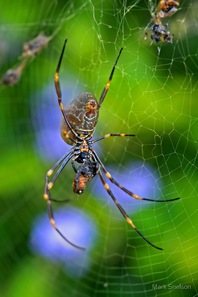 Golden Orb Weaver 2 by Mark Snelson