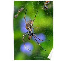 Golden Orb Weaver 2 Poster