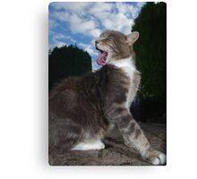 Tabby cat licking fur Canvas Print