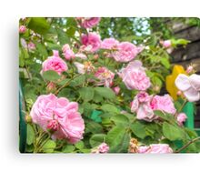 Pink Roses in the Garden Canvas Print