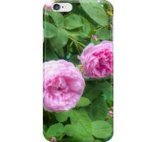 Pink Roses in the Garden 2 iPhone Case/Skin