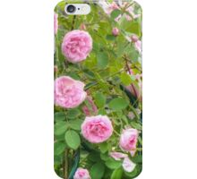 Pink Roses in the Garden 4 iPhone Case/Skin