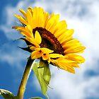 Sunny by Sharon Hammond