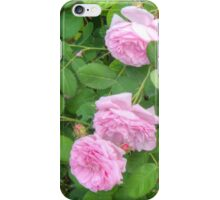 Pink Roses in the Garden 5 iPhone Case/Skin