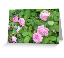 Pink Roses in the Garden 5 Greeting Card