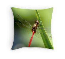 Red Dragonfly 1 Throw Pillow