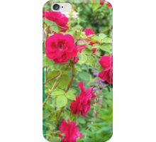 Red Climbing Roses iPhone Case/Skin