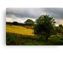 In the Field Canvas Print