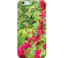 Red Climbing Roses 2 iPhone Case/Skin