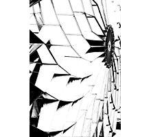 stilized kites flying in the sky Photographic Print