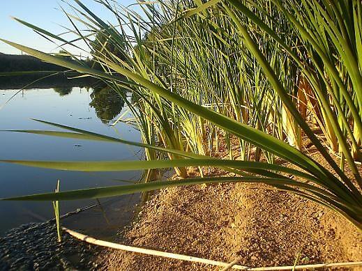 reeds by elizabethrose05