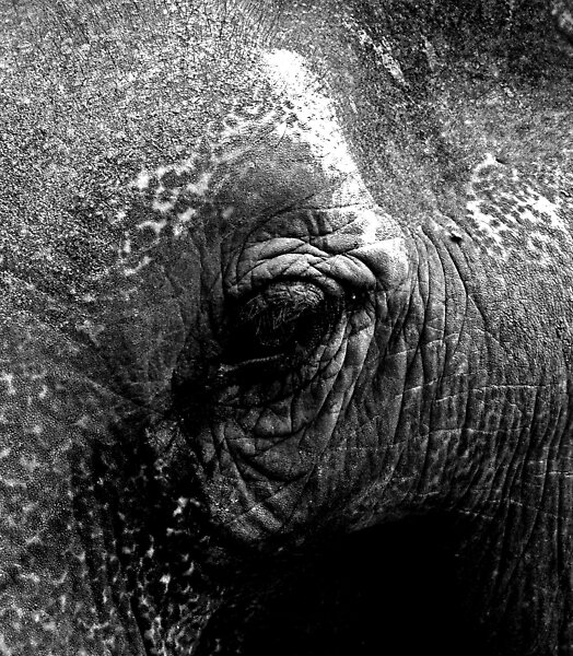 Elephants eye by clickwizzclick