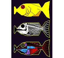 The Hitchhikers Guide to the Galaxy - 3 Babel Fish Photographic Print