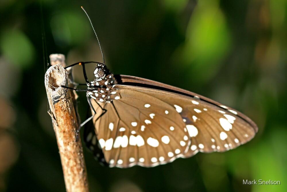 Butterfly 1 by Mark Snelson