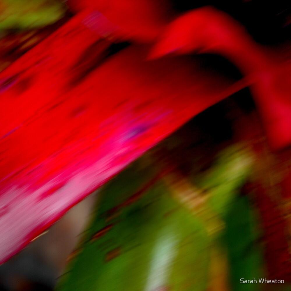 pink tongue by Sarah Wheaton