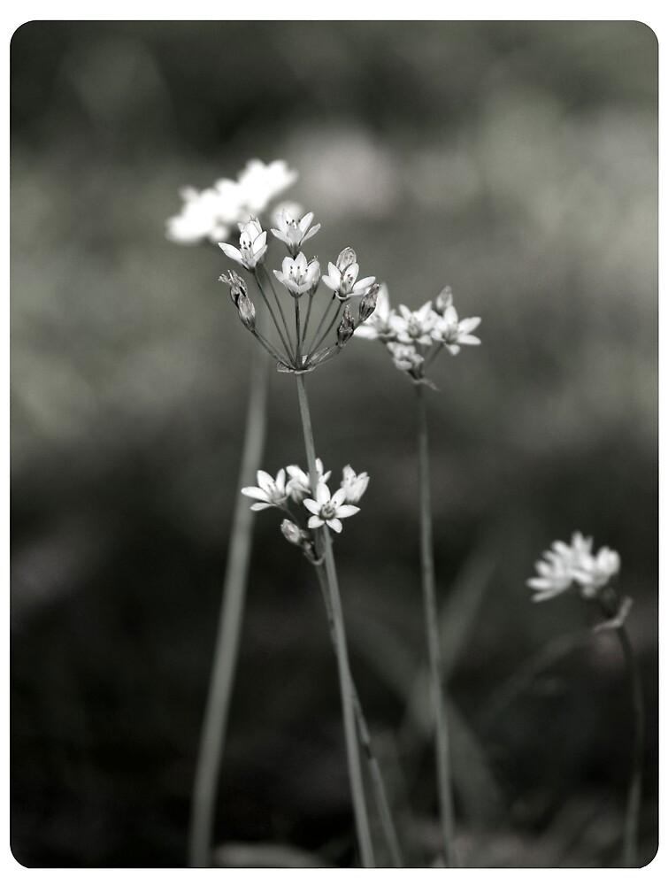 Simplicity by Imogene Munday