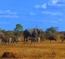 African Dream - kindly donated by Audrey Sohikian - Research Intern by pennies4eles