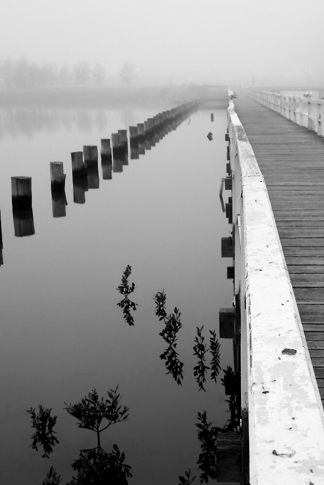 Fog at Stony Creek Backwash by Thomas Kress