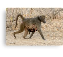 Baboon Family COMING Canvas Print
