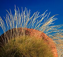 Spinifex by Thomas Kress