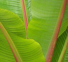 Palm in Adelaide Botanic Gardens by Craig Watson