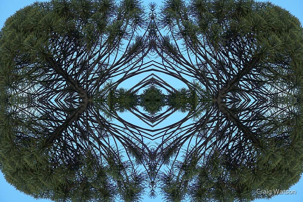 Double reflections - Bunyah Pine, Adelaide Botanic Gardens by Craig Watson