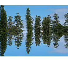 Mirrored pines - Adelaide Botanical Gardens Photographic Print